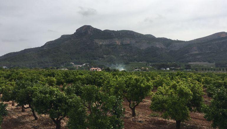 Imagen de campos de cultivo en Marxuquera