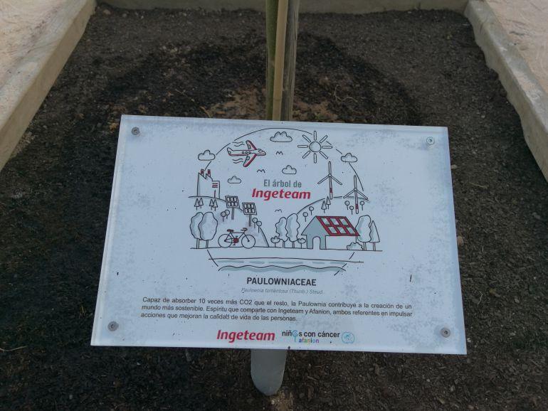 Ingeteam y afanion plantan un rbol en el jard n bot nico for Jardin botanico albacete