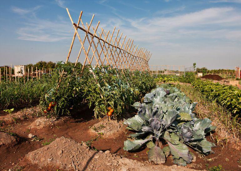 13 nuevas hectáreas para tomates más cercanos