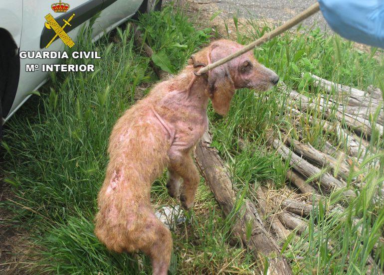 Fotografía facilitada por la Guardia Civil de un perro localizado en el municipio de Soutomaior.