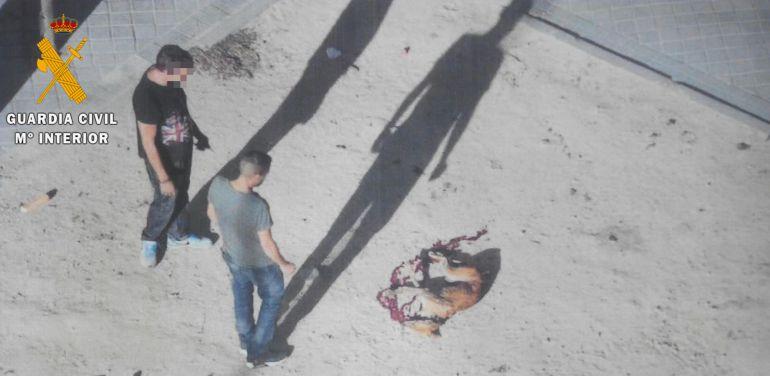 Uno de los animales robados fue arrojado desde un tercer piso