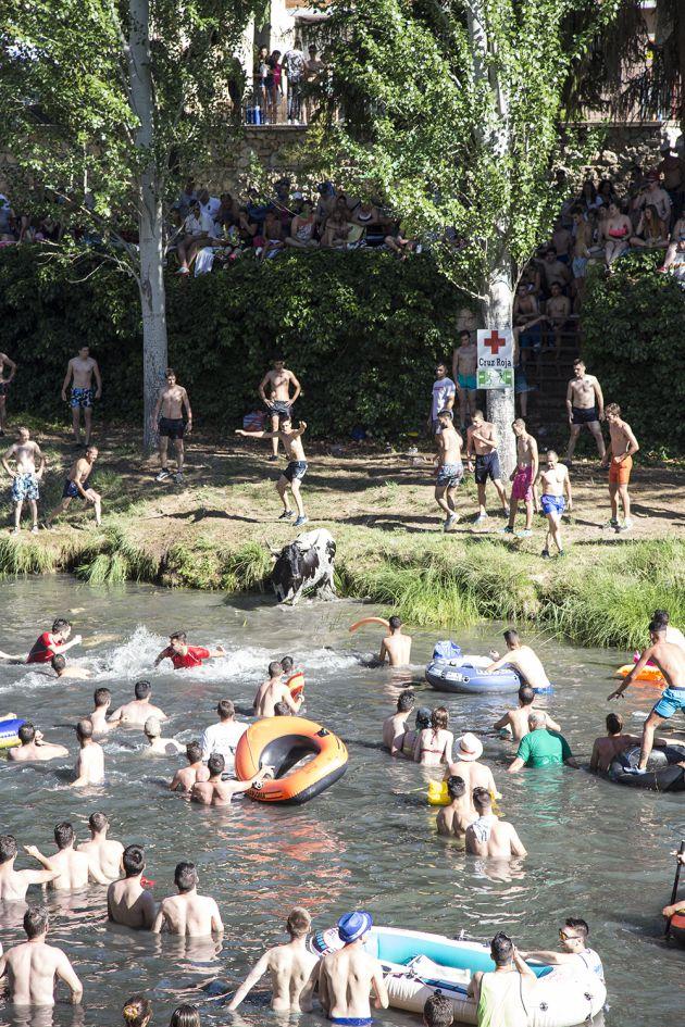 """Unas 8.000 personas participan en la fiesta """"vacas por el Tajo"""" celebrada este fin de semana en la localidad de Trillo (Guadalajara): 8.000 personas en las """"vacas por el Tajo"""" de Trillo"""