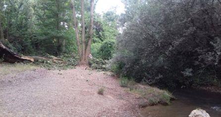 Otra foto del árbol caído