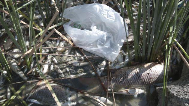 Peces muertos en el río a su paso por Encinarejo