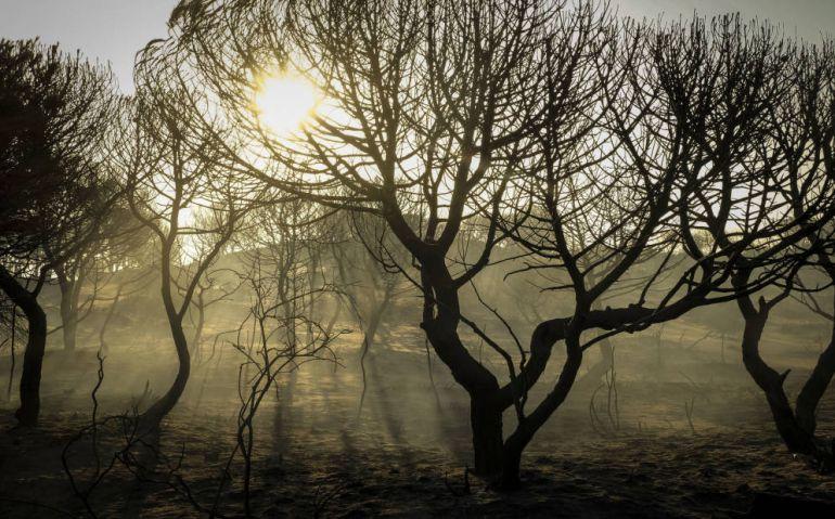 Incendio Doñana: La negligencia de una empresa carbonera, origen del incendio de Moguer