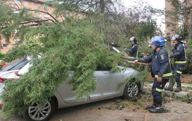 Los Bomberos han tenido que cortar las ramas del pino para poder liberar los vehículos