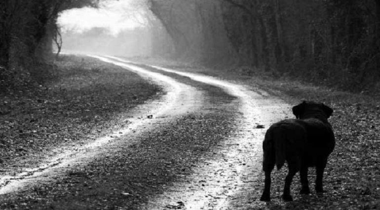 Las protectoras denuncian el incremento de abandono de animales por vacaciones