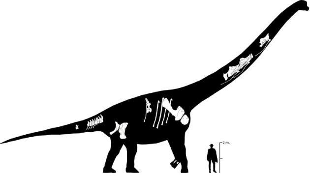 Esqueleto del Europatitan