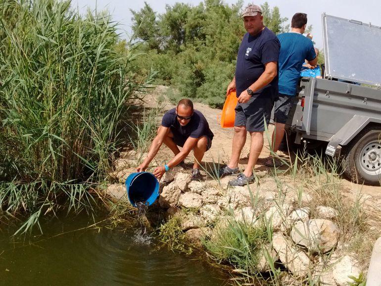 Pla general de l'alliberament de les anguiles al medi fluvial.