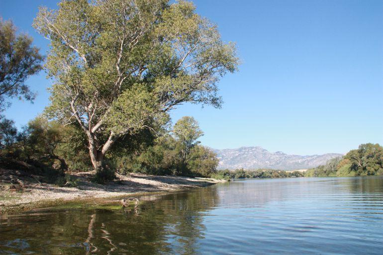 Imatge d'arxiu del riu Ebre al seu pas per l'Illa dels bous, al terme municipal de Tortosa.