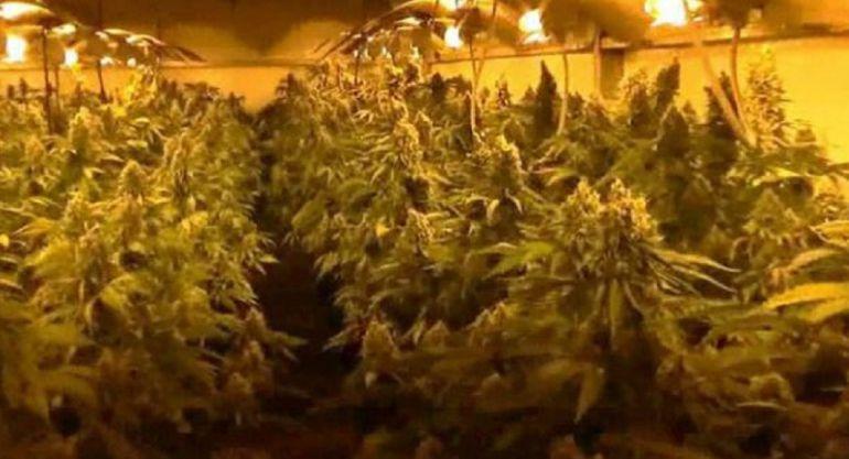 Imagen archivo plantación ilegal de marihuana