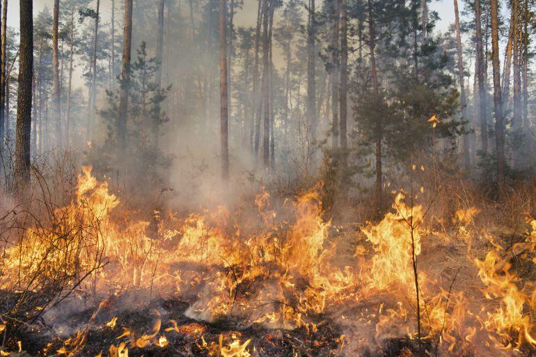 El Bierzo incrementa el número de incendios en zona arbolada