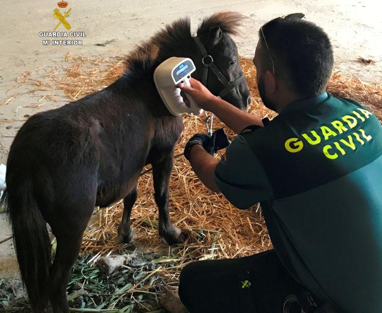 La Guardia Civil investiga a un joven de 23 años por el robo de un pony