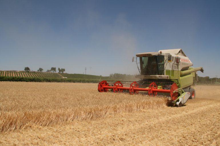 Un cosechadora en un campo de cereal en la comarca
