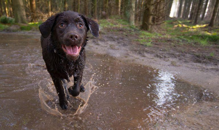 Los peregrinos no deben ser los mejores amigos de los perros