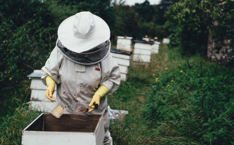 El calor afecta negativamente a las colonias. Además mengua el número de flores. Pesticidas y elementos químicos en la agricultura aleja a las abejas. En suma, baja la producción de miel.