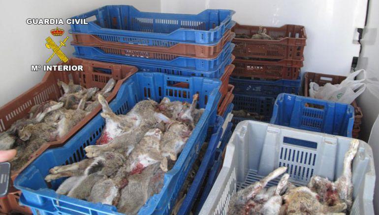 Conejos hallados en el interior de una furgoneta