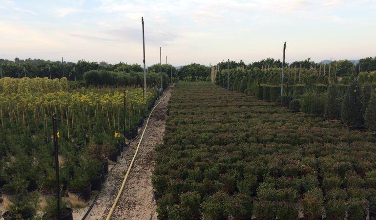 rboles y arbustos se plantar n en octubre en