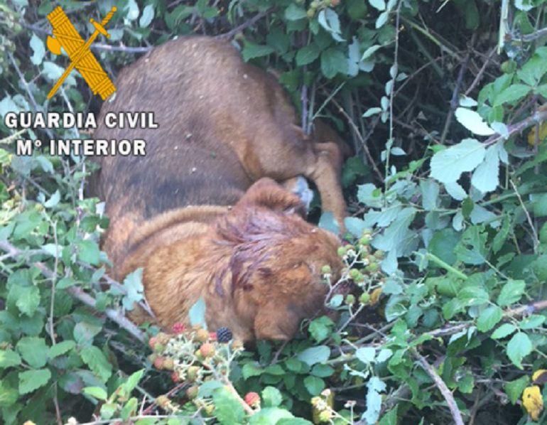 La Guardia Civil busca al autor de la muerte de un perro al que dispararon a la cabeza