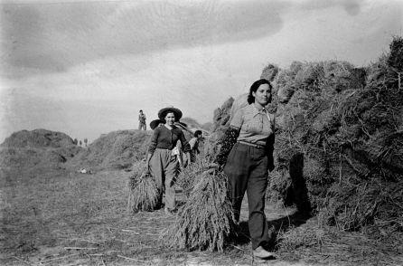 Dones, treballant als camps d'arròs de la Col·lectivitat d'Amposta.