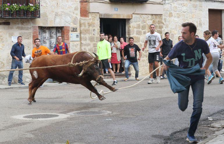 Fiesta del toro enmaromado de Astudillo (Palencia)