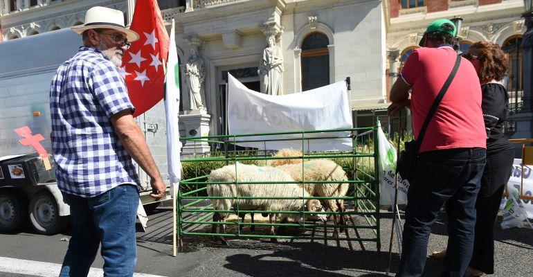 Ganaderos de siete autonomías se han concentrado este miércoles ante el Ministerio de Agricultura
