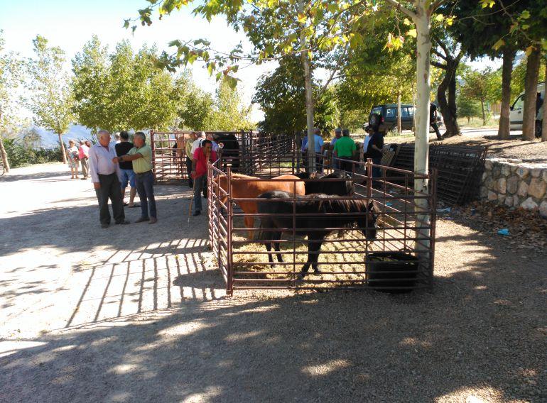 I Feria del ganado en el Mirador de la Campiña de Cazorla