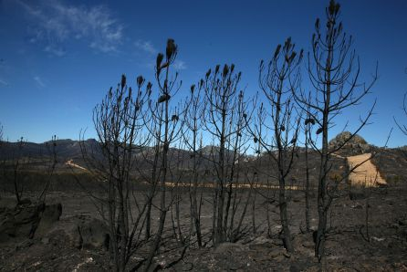 Restos del incendio de Castrocontrigo (León)