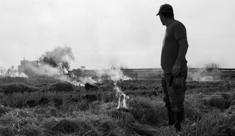 Los arroceros amenazan con protestas si no se permite quemar la paja del arroz