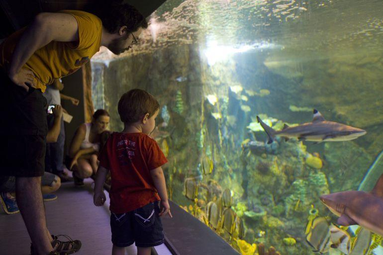 Uno de los grandes acuarios del Biodomo