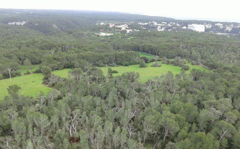 Aspecto del bosque tras el paso del tornado el invierno pasado.