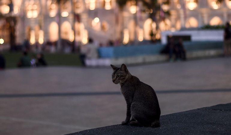 El refrán de 'de noche todos los gatos son pardos' ya existía en el siglo XVI