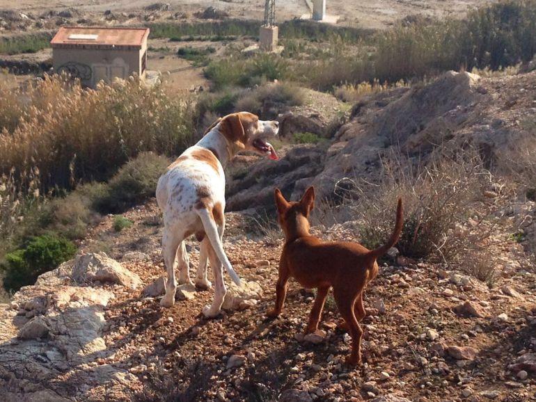 perros cazando