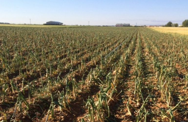 Cajaviva Caja Rural inyecta 9 millones de euros en nuestra provincia en préstamos para la sequía