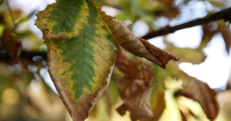 Hoy en CienciaTres hablamos del otoño