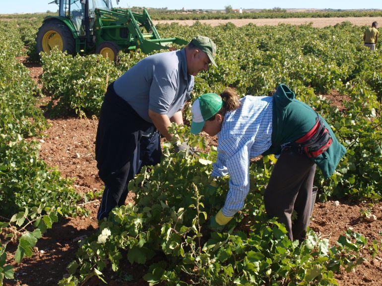 Finaliza el año vitícola con 33,8 millones abonados en la reestructuración de viñedo