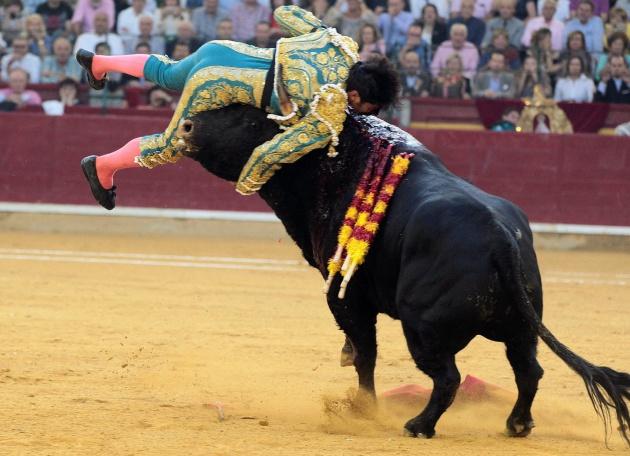 El diestro Cayetano Rivera es cogido en la faena a su primer toro.