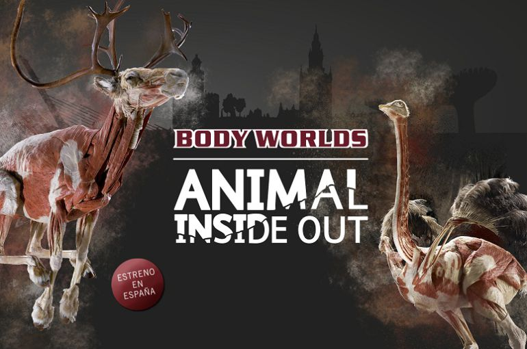 En diciembre llega a Sevilla la exposición Animal Inside Out: En diciembre llega a Sevilla la exposición 'Animal Inside Out'