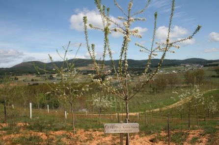 Espacio para los cerezos en el Bosque Didáctico