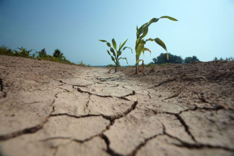 Sequía Madrid: El campo madrileño pide a la Comunidad que conceda el dinero de las ayudas de la PAC por la sequía