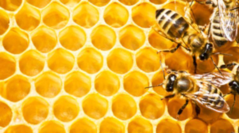 La sequía afecta a la producción de miel en la provincia de Granada