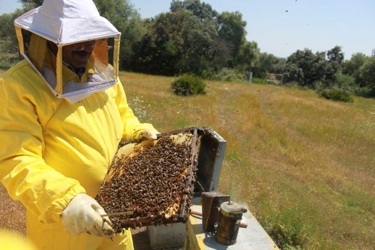 """""""Está siendo un año catastrófico para la apicultura"""""""