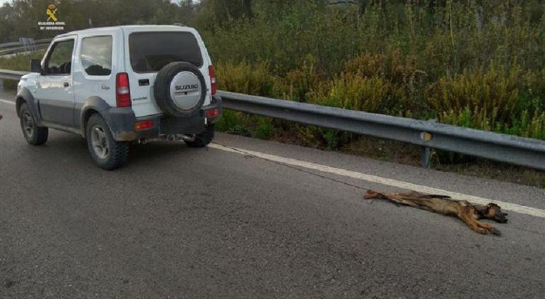 Investigado por la muerte de un perro al arrastrarlo con su coche varios kilómetros