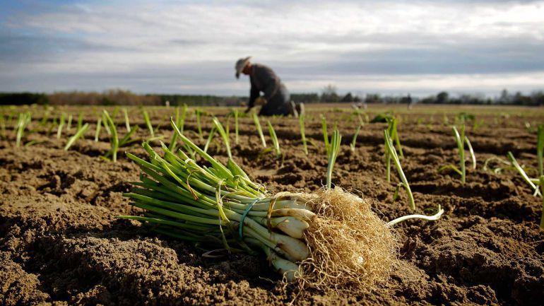 Un agricultor recolectando
