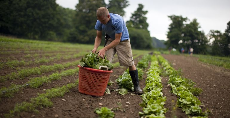 Un agricultor trabaja la tierra de cultivo