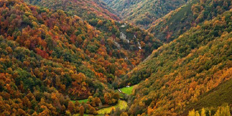 Vista del Bosque de Muniellos