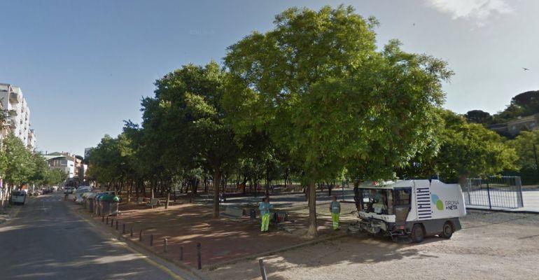 Una imatge del parc de Vista Alegre, on hi ha alguns dels exemplars a eliminar.