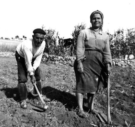 Muchos centenarios habían trabajado toda su vida en el campo.