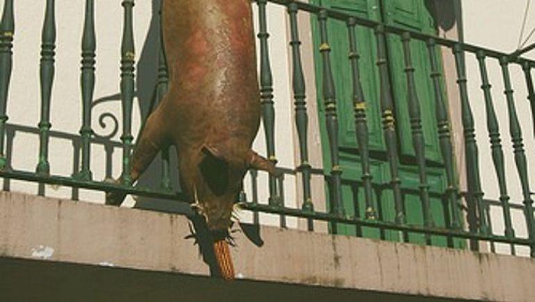 Exhibición en la plaza de Otañes del animal muerto.
