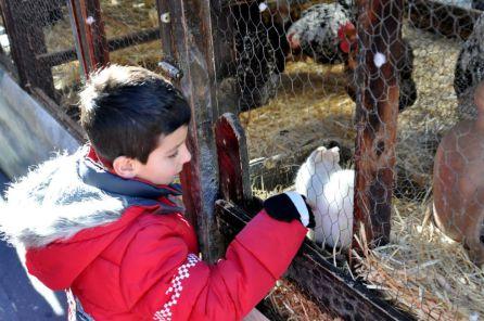 Los más pequeños disfrutan de la granja móvil